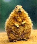 """Groundhog"""